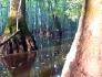 cypressbluelight